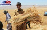 سنجش میزان هدر رفت گندم در مزارع گلستان