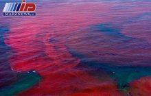 پدیده کشند قرمز در منطقه دریا بزرگ چابهار مشاهده شد