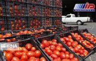 واردات گوجه فرنگی به اقلیم کردستان عراق ممنوع شد