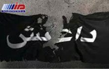 داعش در عراق از گاوهای انتحاری استفاده کرد