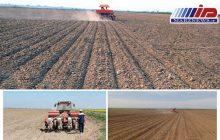 آغاز کاشت دانه روغنی سویا در بیش از 1000 هکتار
